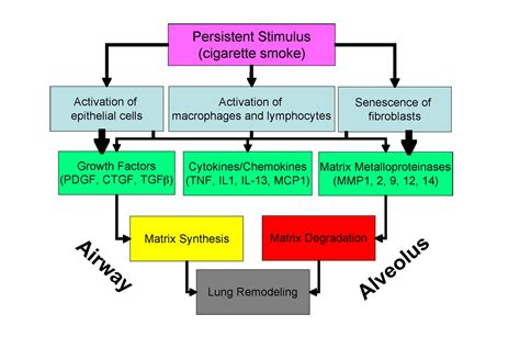 COPD: Pathogenesis, Epidemiology, and the Role of