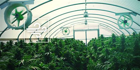 Tips For Making Your Cannabis Grow Room Easier To Manage