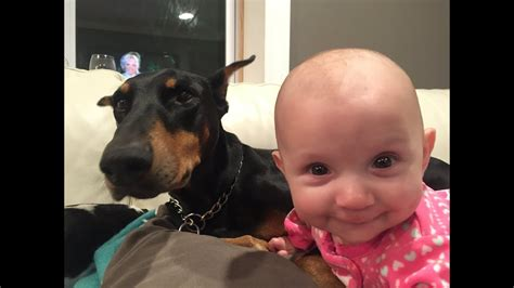 Doberman Plays With Baby - YouTube