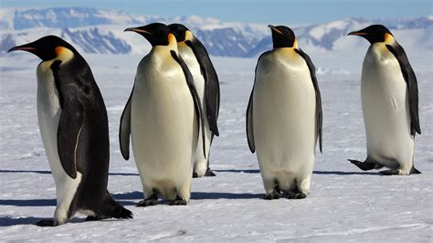 Watch March of the Penguins Full Movie HD | Movies & TV Shows